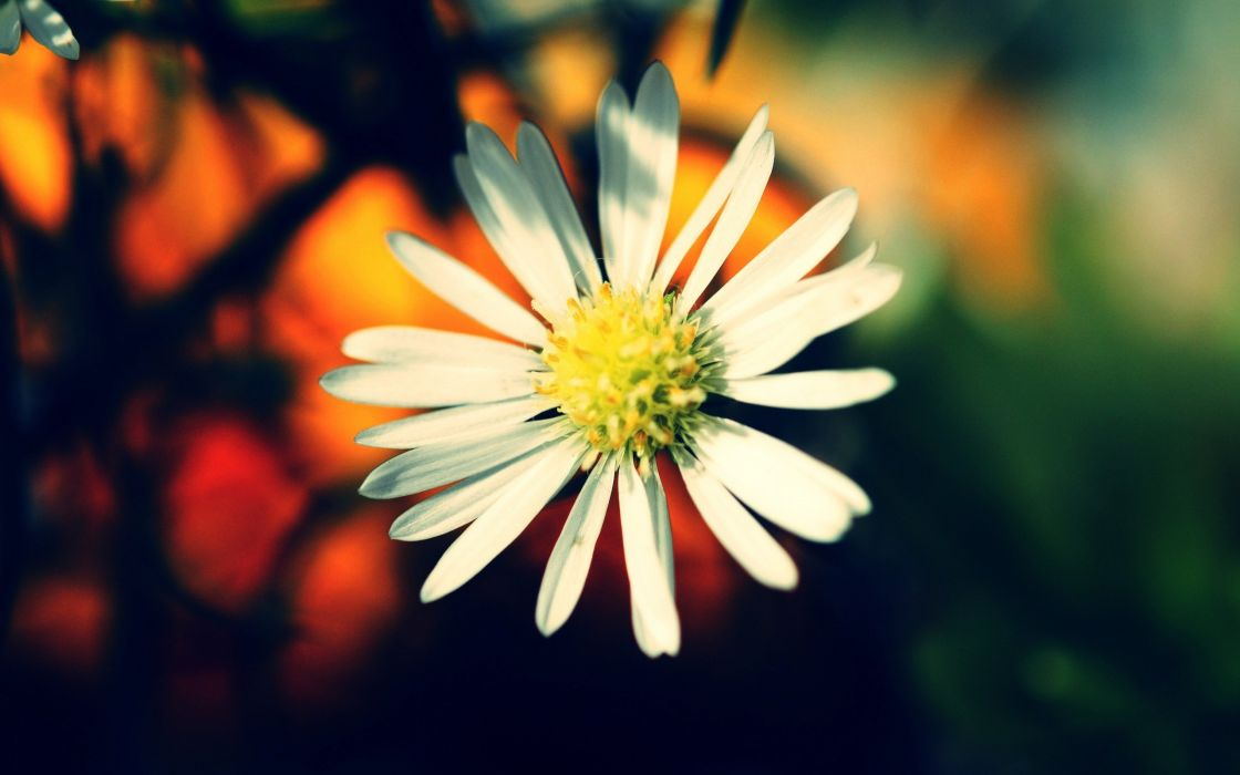 Warm colors flower wallpaper
