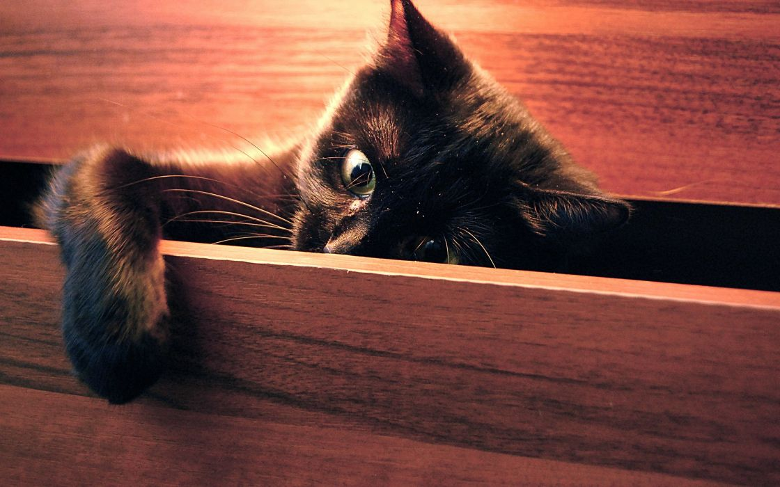 Cat in a drawer wallpaper