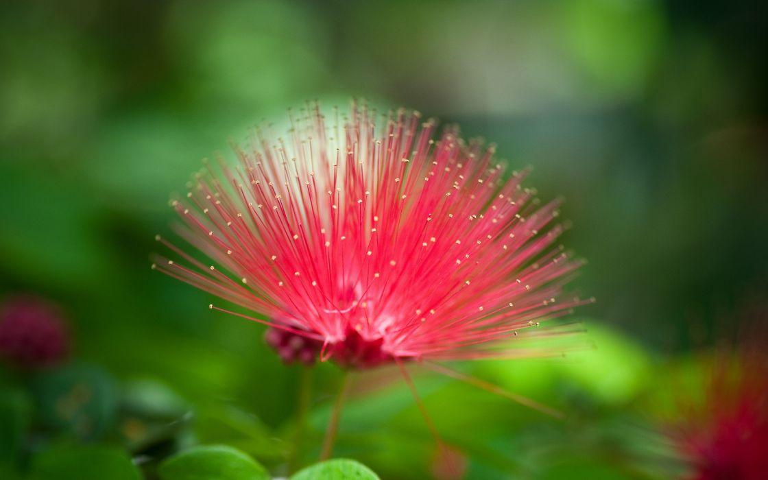 Exotic red flower wallpaper