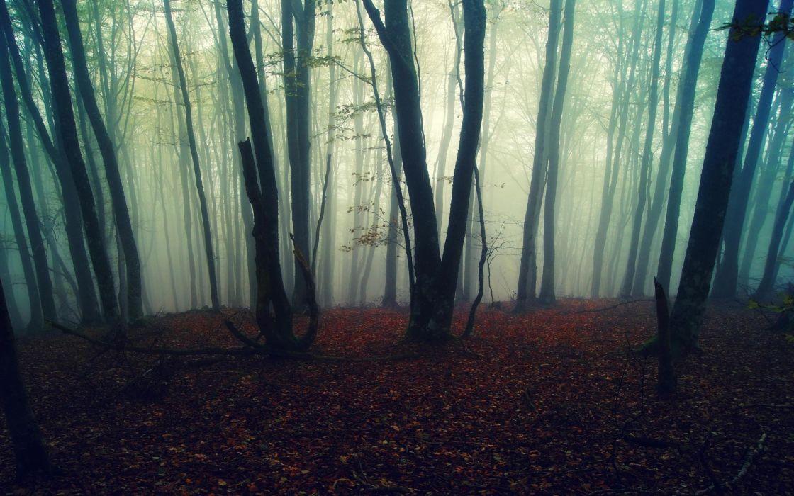 Misty forest wallpaper