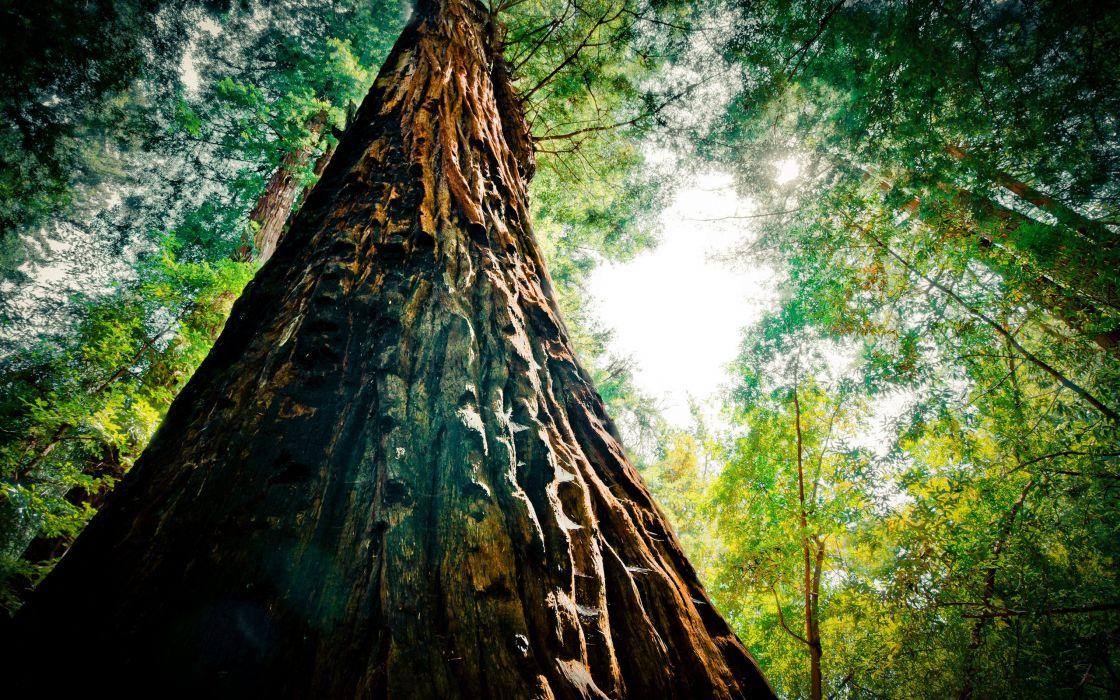 Redwood extreme wallpaper