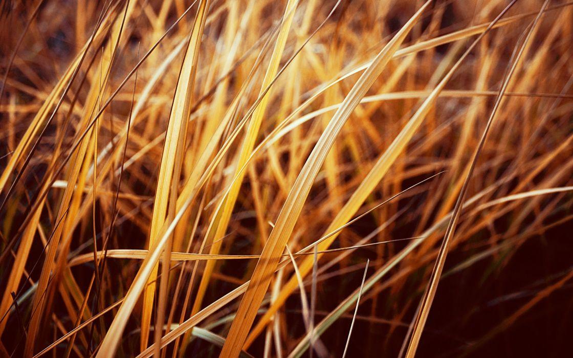 Autumnal grass wallpaper
