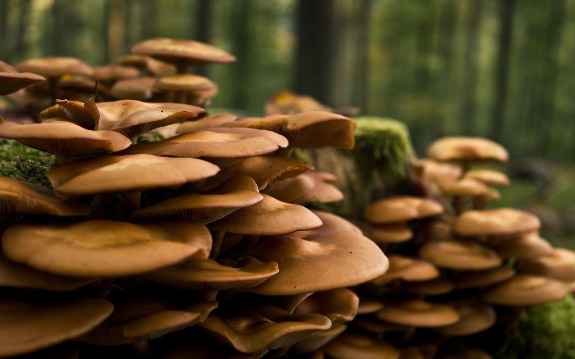 A world of mushrooms wallpaper