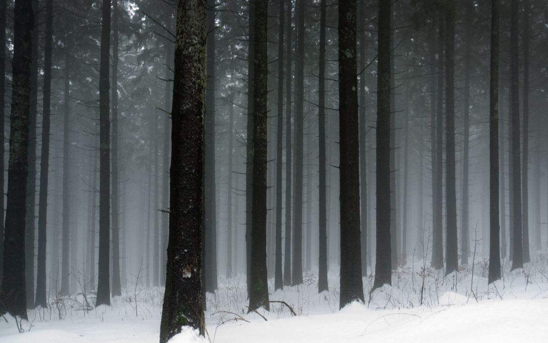 Snowy forest wallpaper