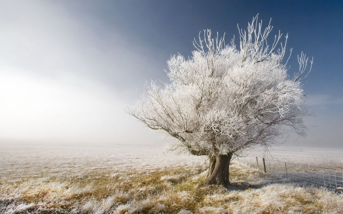 A frosty tree wallpaper