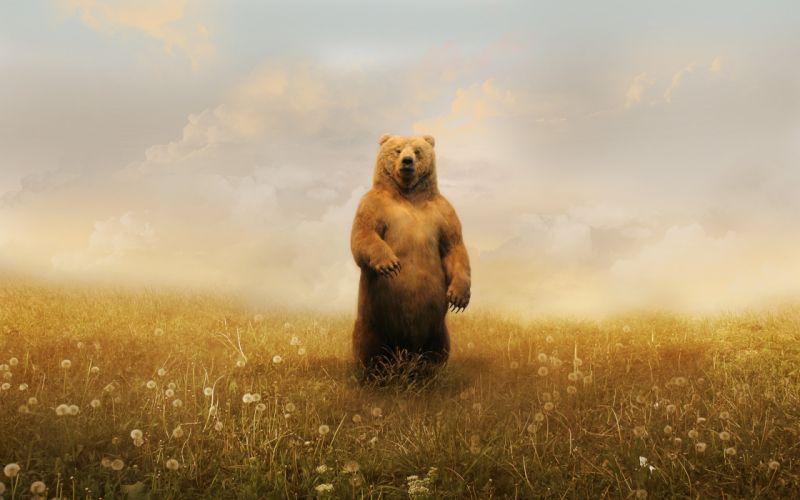 Wild brown bear wallpaper