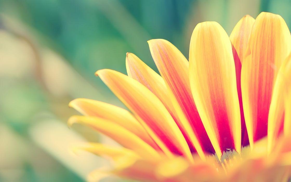 Orange flower wallpaper