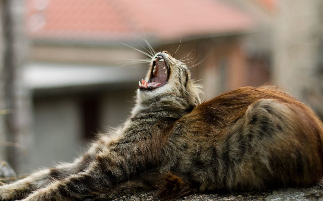 Good morning kitty wallpaper