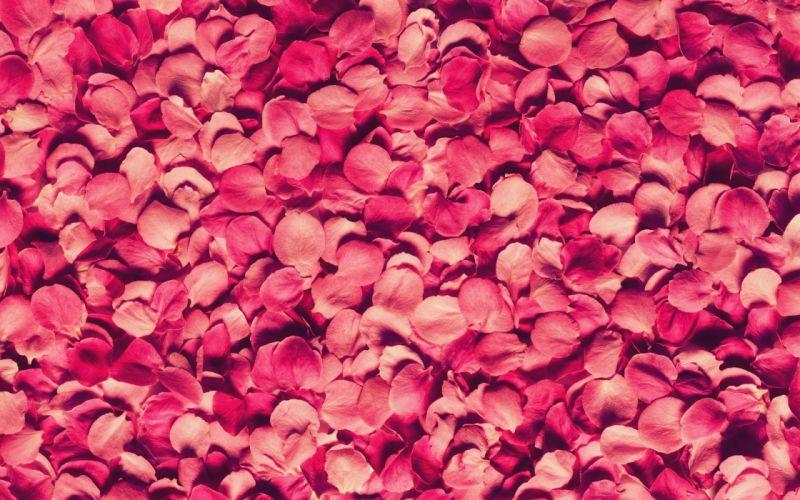 Rose petals wallpaper