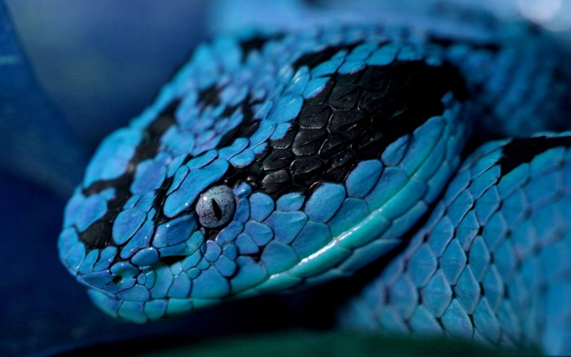 Blue snake wallpaper
