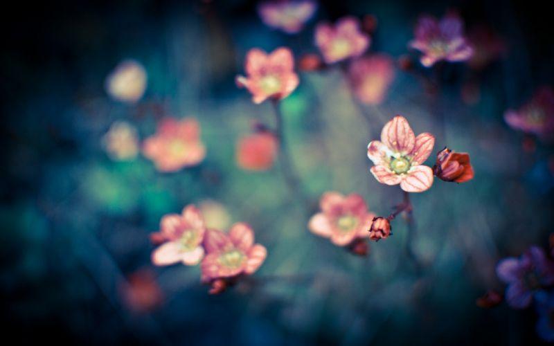 Flowers in focus wallpaper