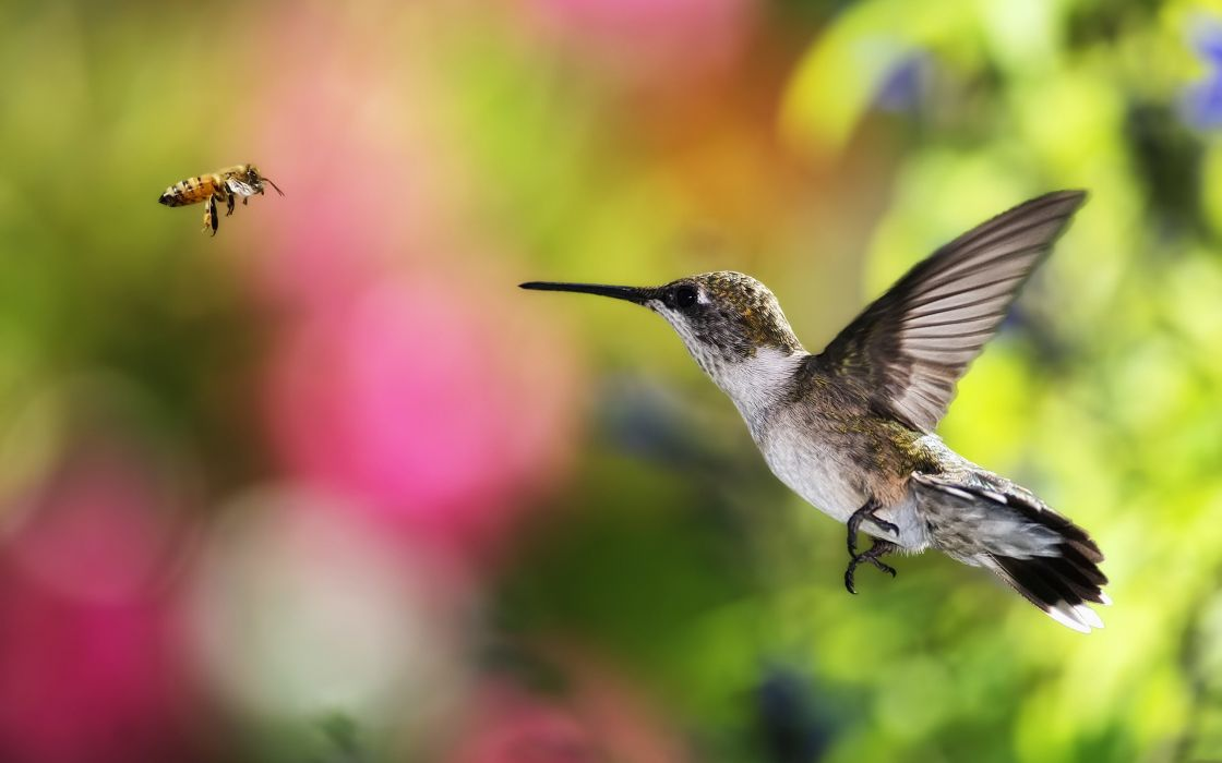 A bird meets a bee wallpaper