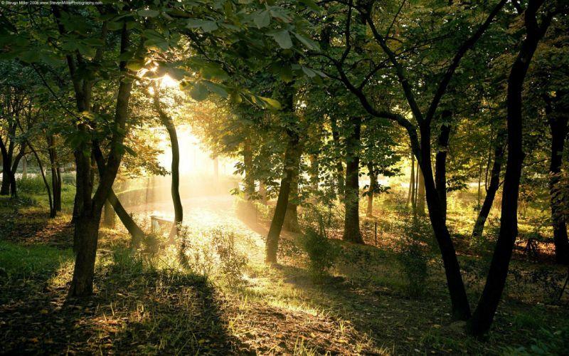 Sun through forest wallpaper