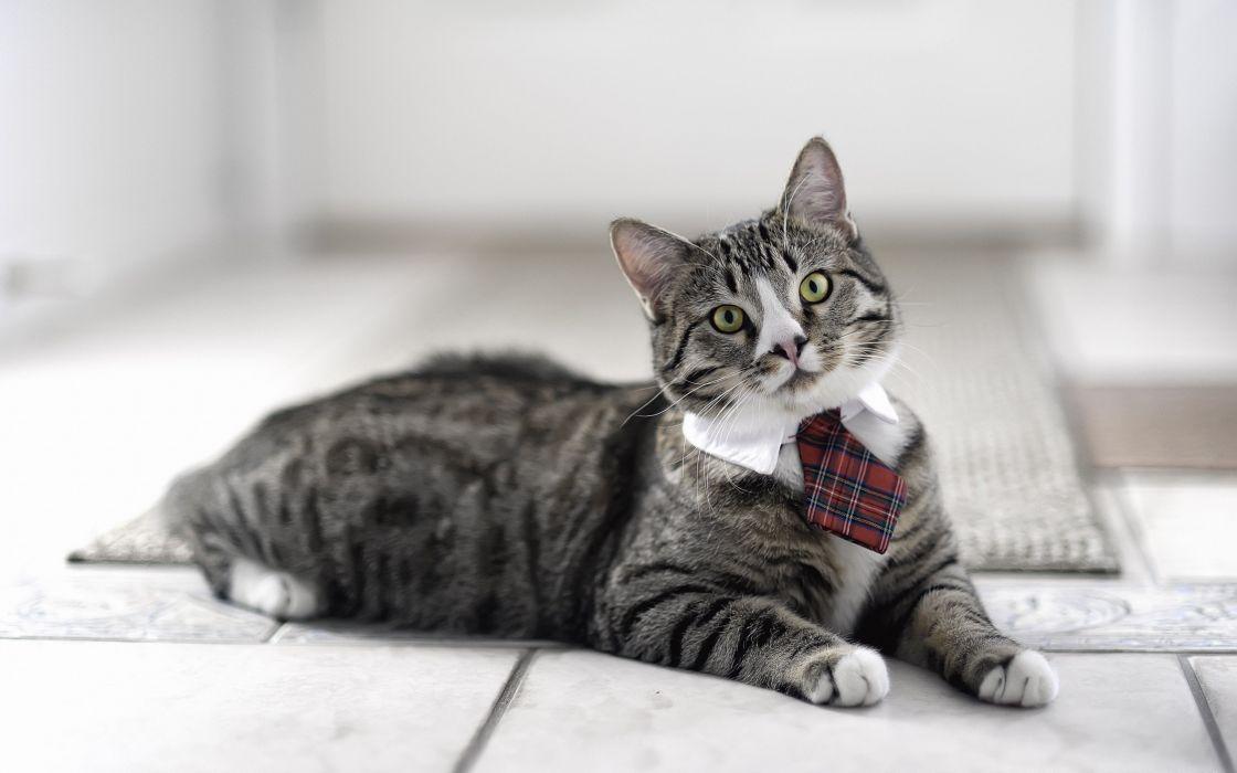 I am a business cat wallpaper