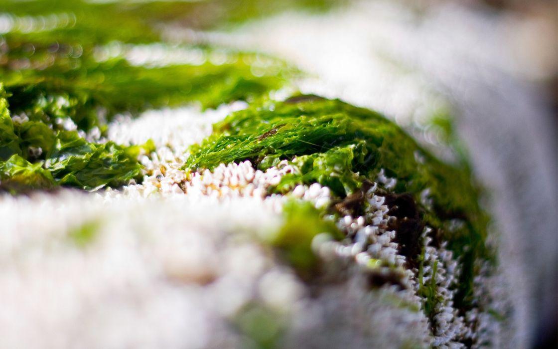 Green algae macro wallpaper