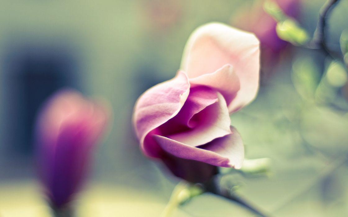 Pink petals wallpaper