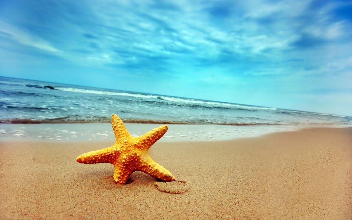 Starfish on a beach wallpaper