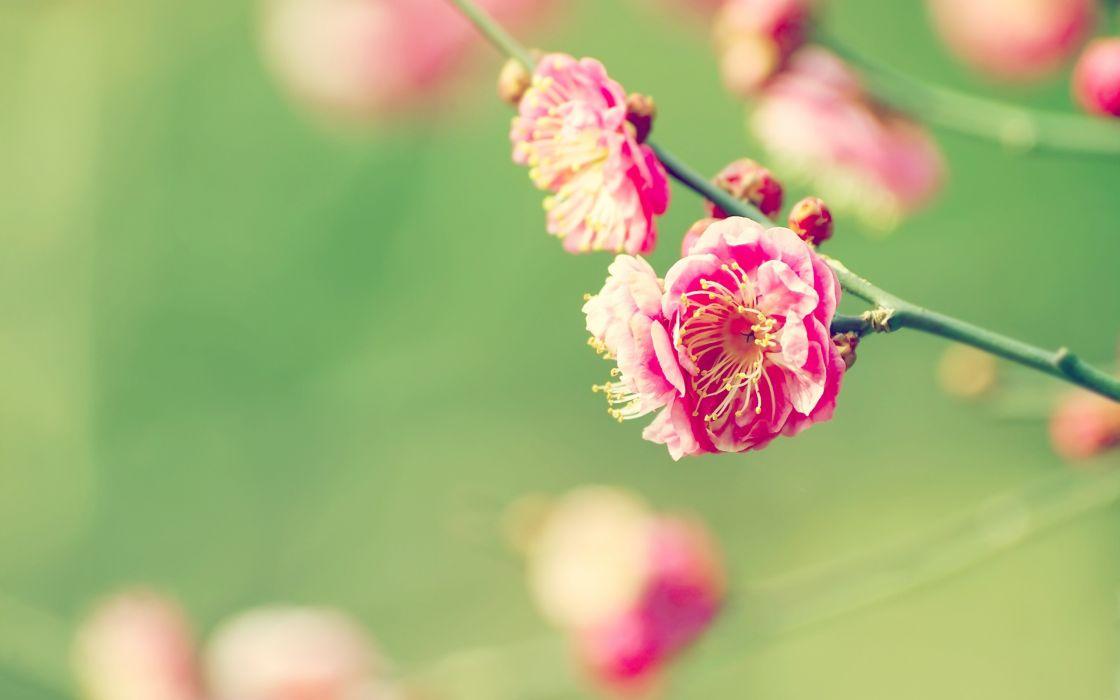 Elegant flowers wallpaper