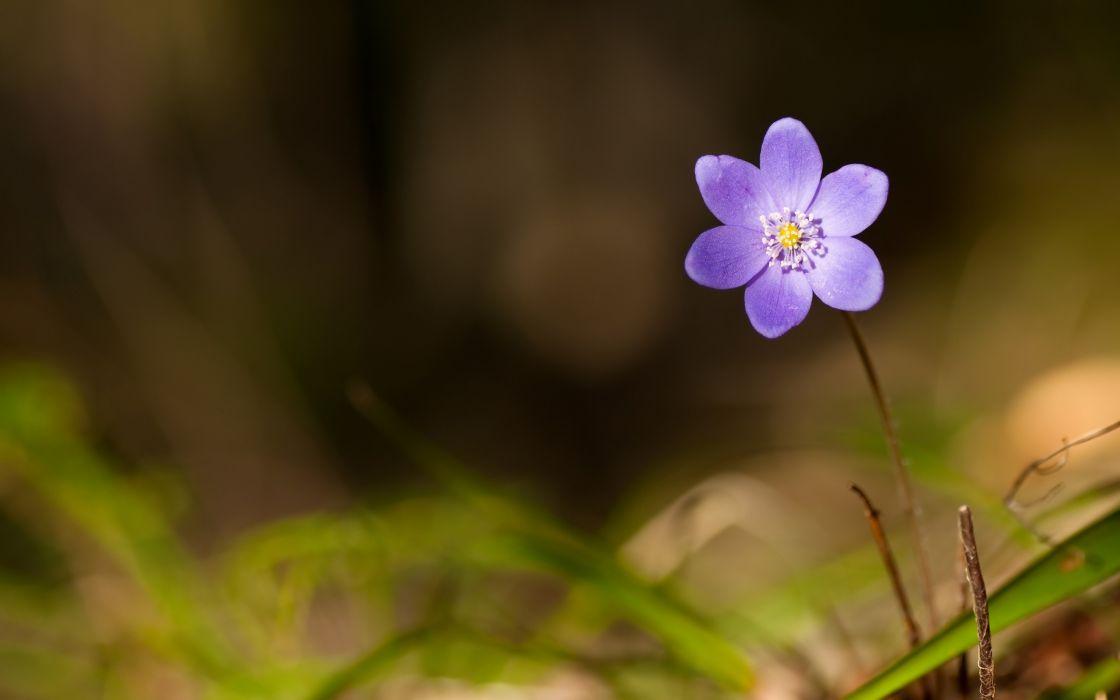 Purple sweet flower wallpaper