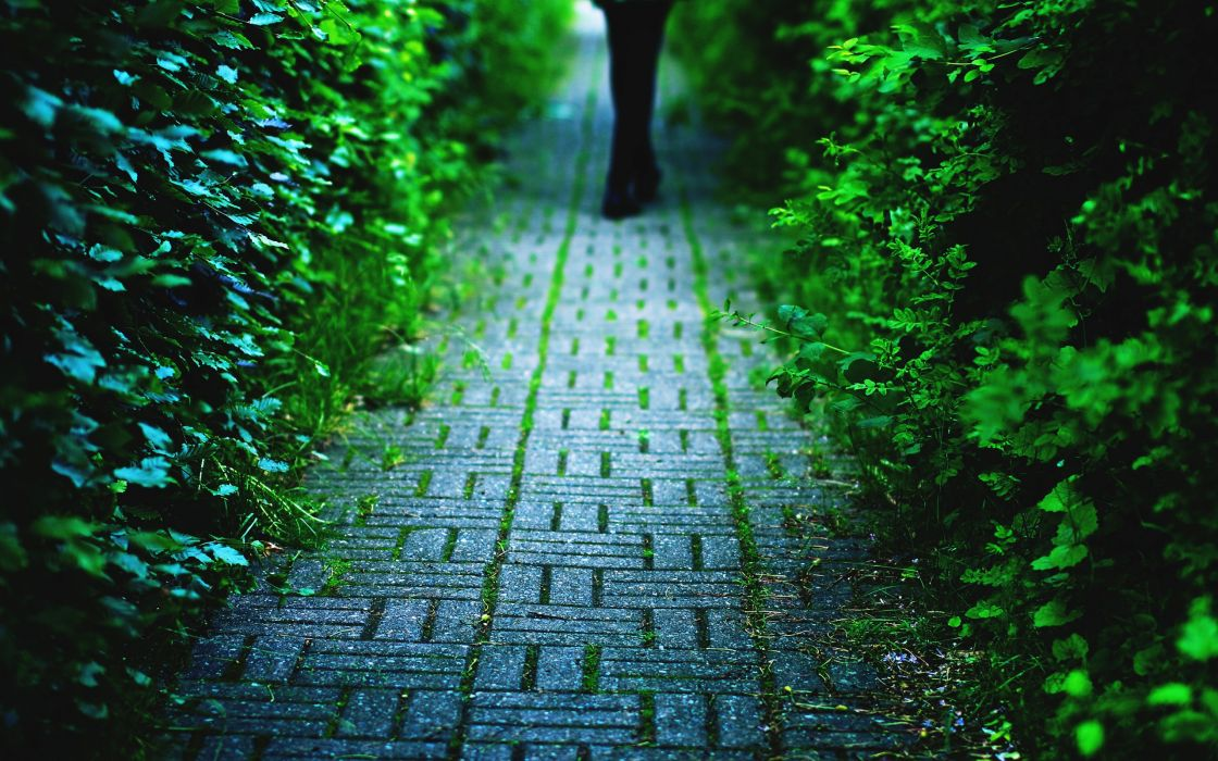 Going into nature wallpaper