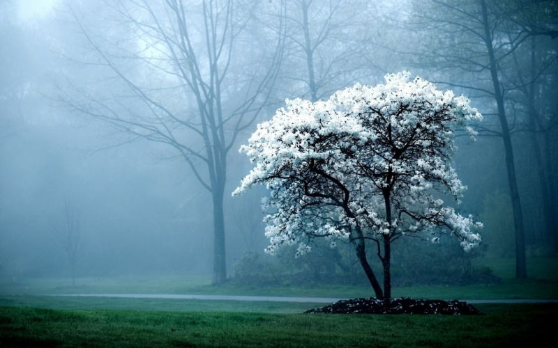 Early morning fog wallpaper