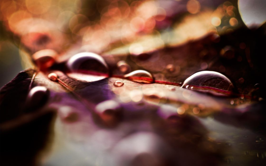Fall leaves and raindrops wallpaper