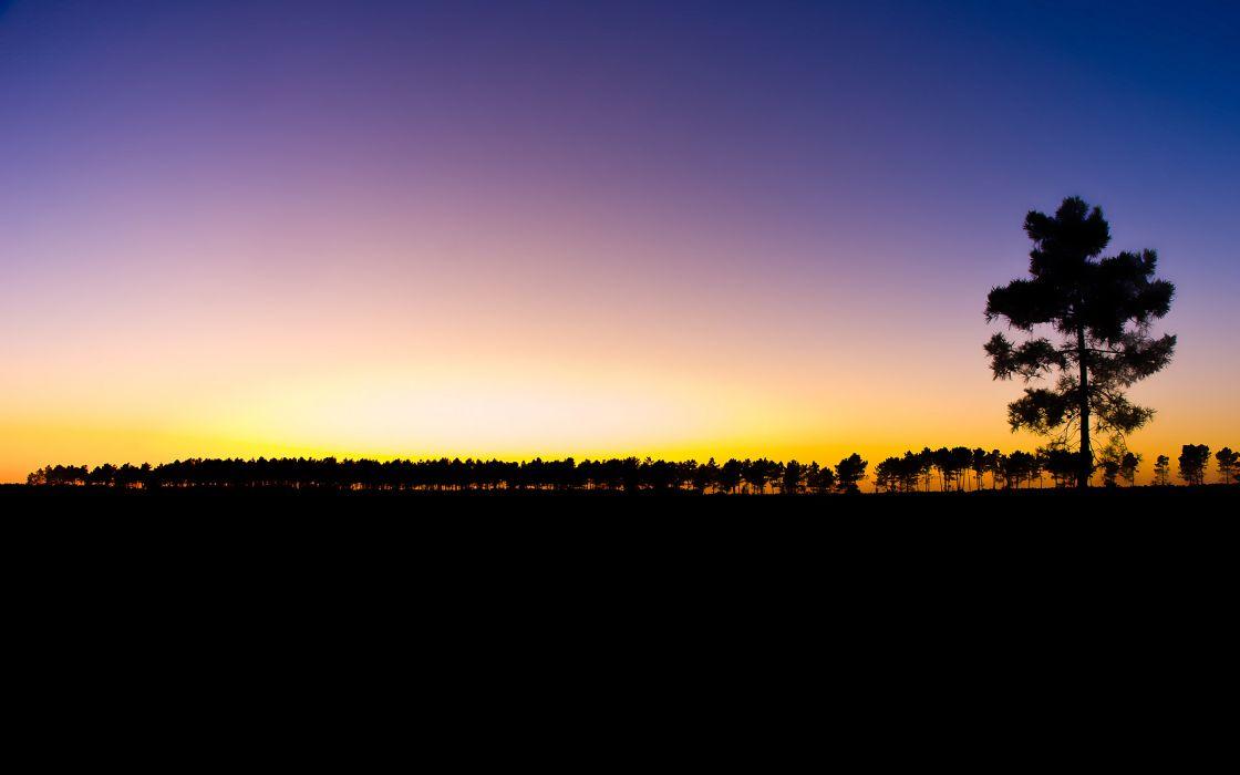 Trees at dawn wallpaper