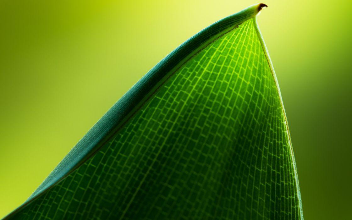 Green leaf macro wallpaper