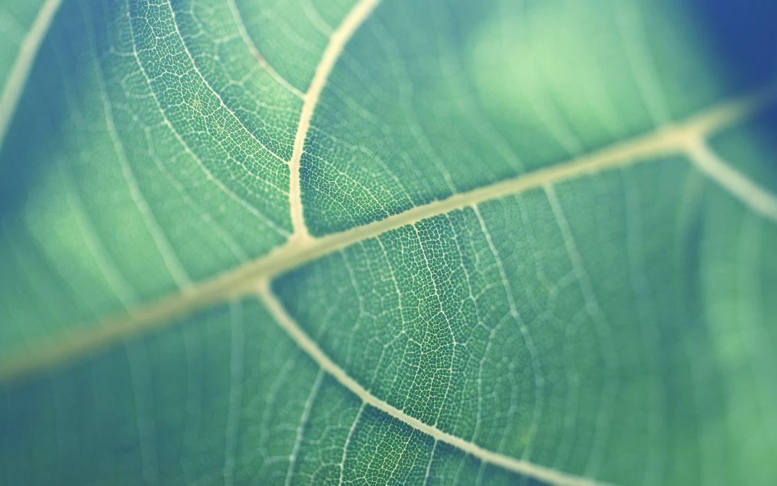 Close-up of a leaf wallpaper