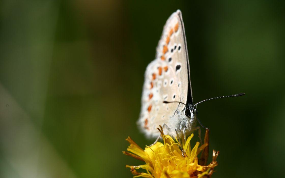 Beautiful white butterfly wallpaper