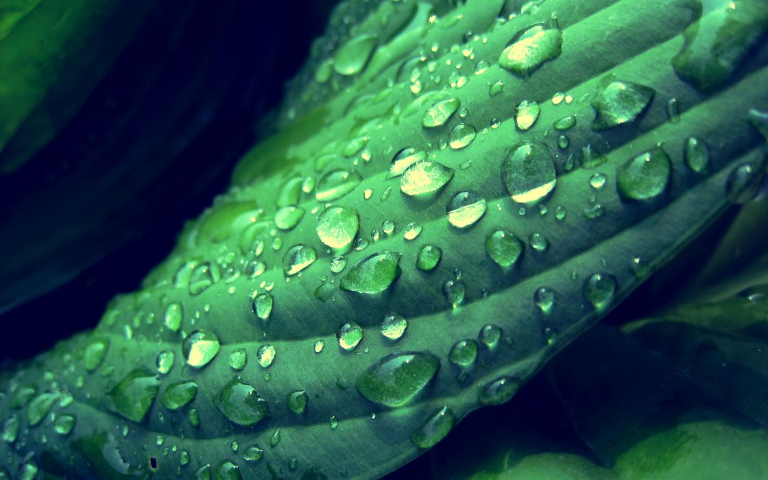 Green leaf with dew wallpaper