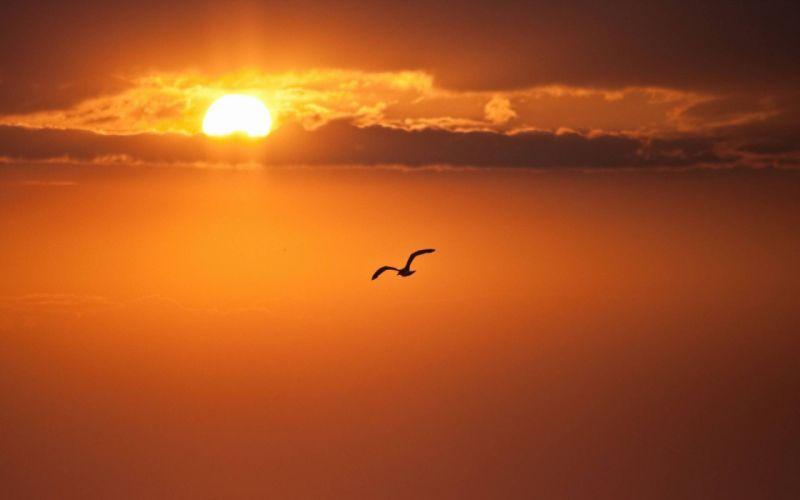 Bird on sunset wallpaper