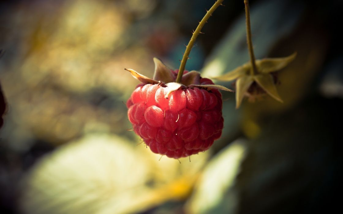 Red raspberry wallpaper
