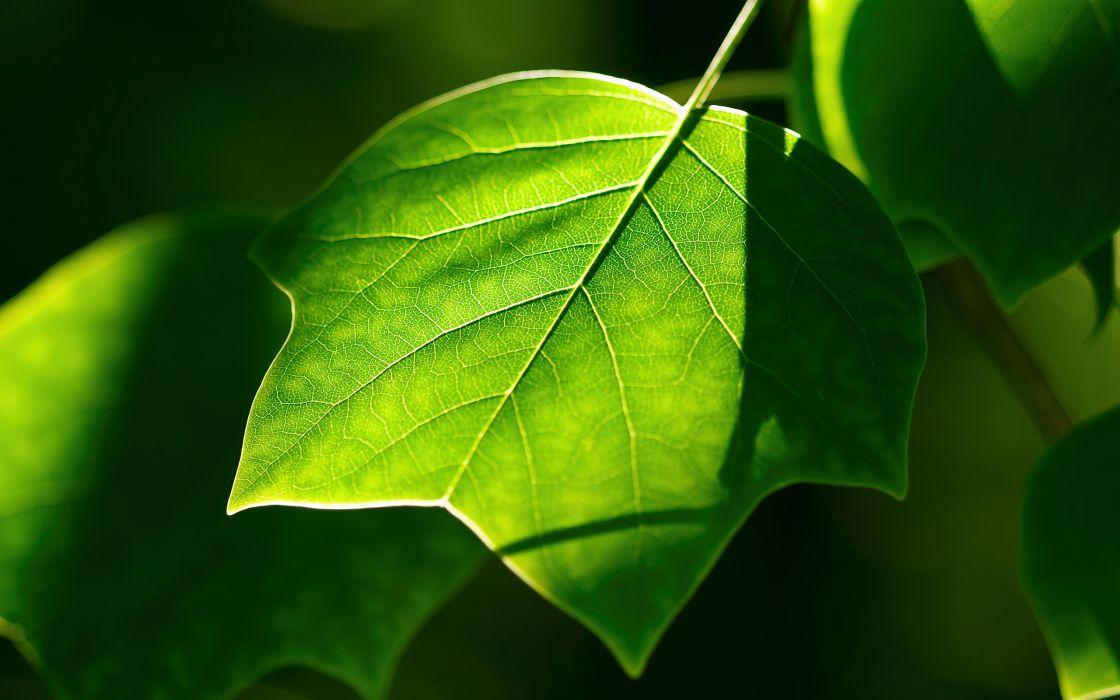 Fresh green leaf wallpaper