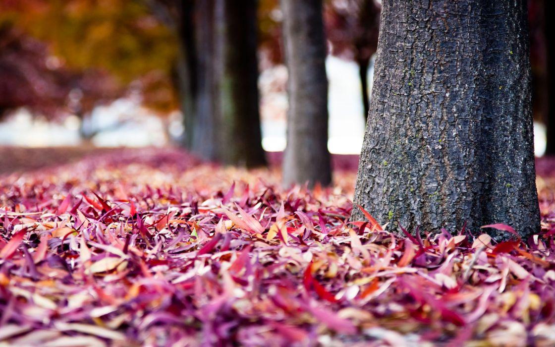 Pink fallen leaves wallpaper