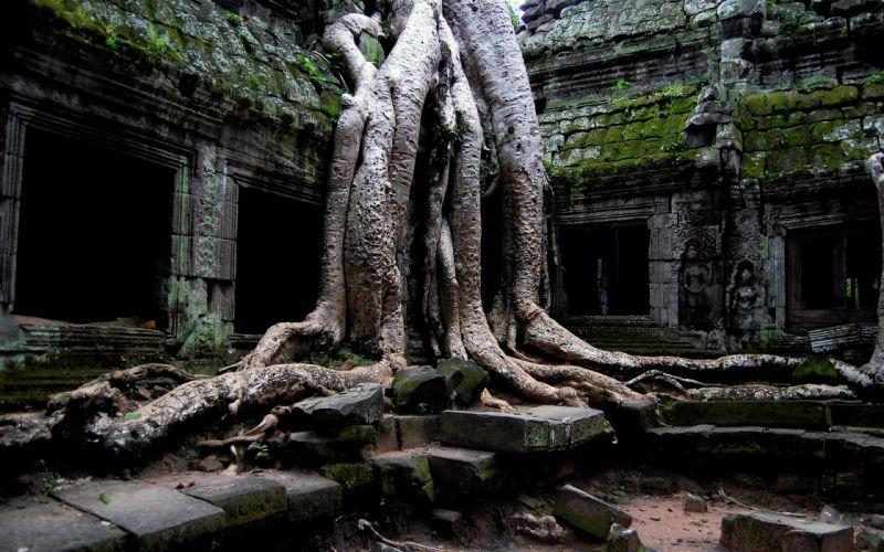 Ta Prohm - Angkor - Cambodia wallpaper