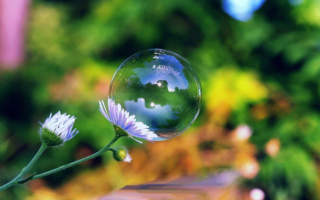 Soap Bubble On A Flower Wallpaper