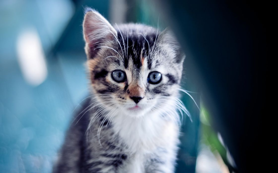 Cute little kitten wallpaper