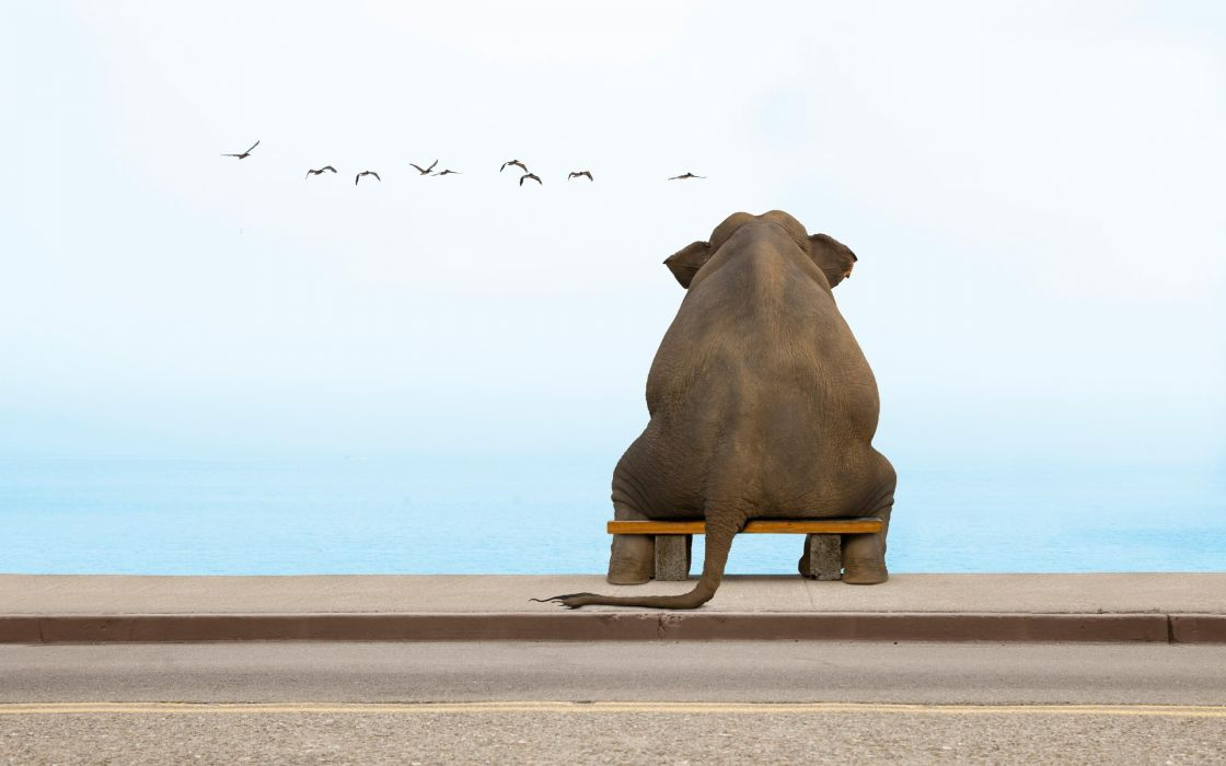 An elephant sits on a bench in deep contemplation wallpaper