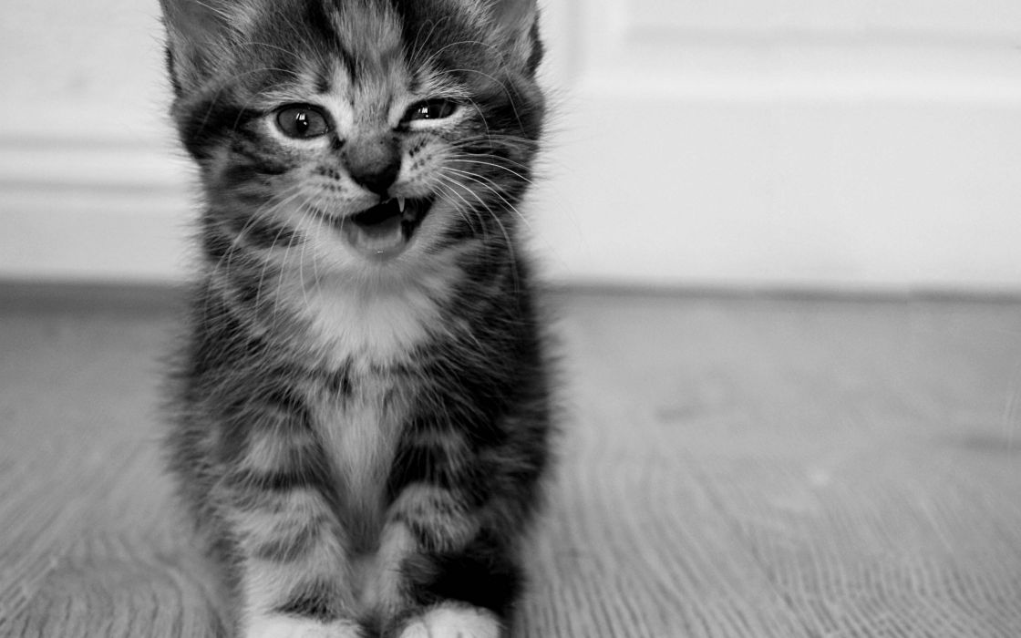Cute black and white kitty wallpaper