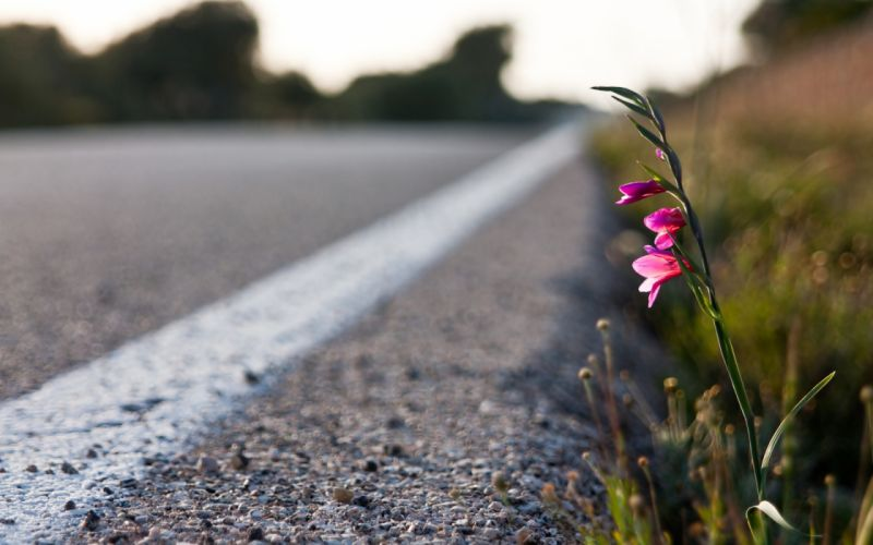 Flowers in the road wallpaper