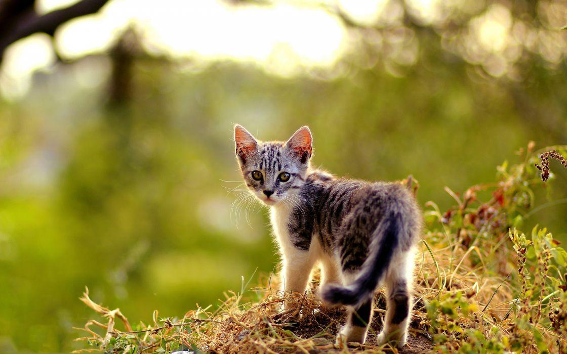 Look back cat wallpaper