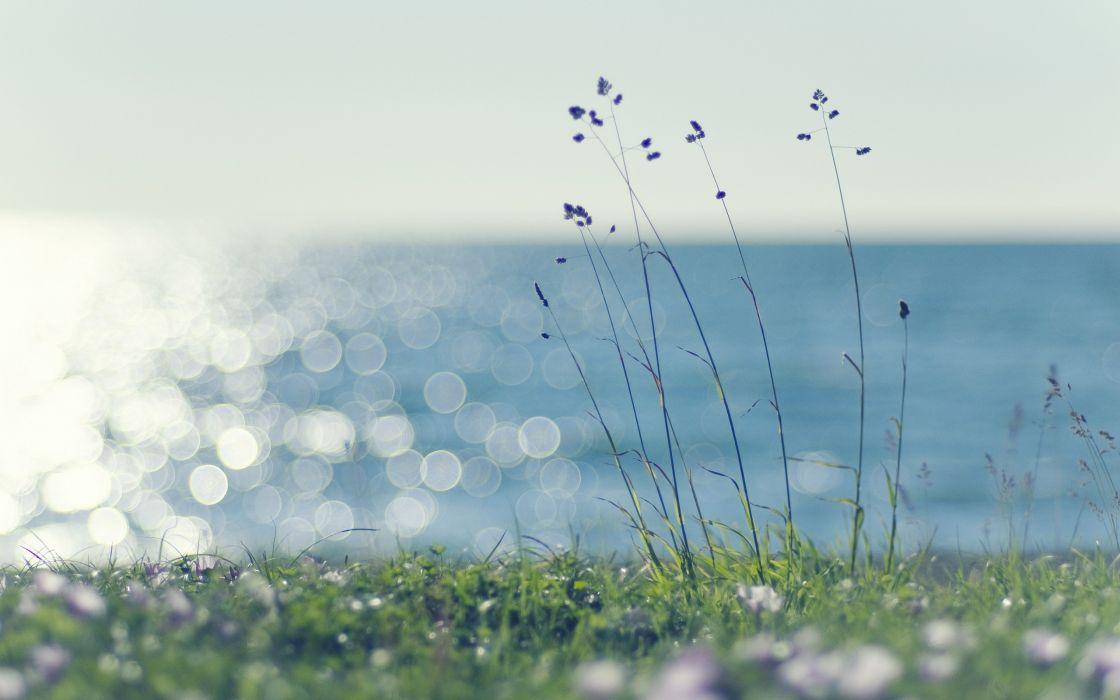 Summer flowers in the grass wallpaper