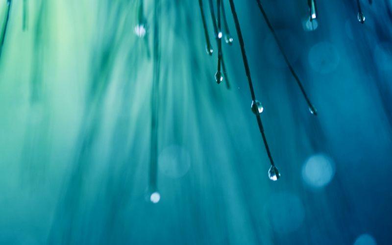 Water drops on spruce needles wallpaper