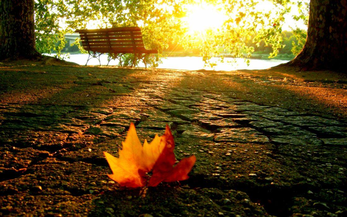 A fallen leaf in the park wallpaper