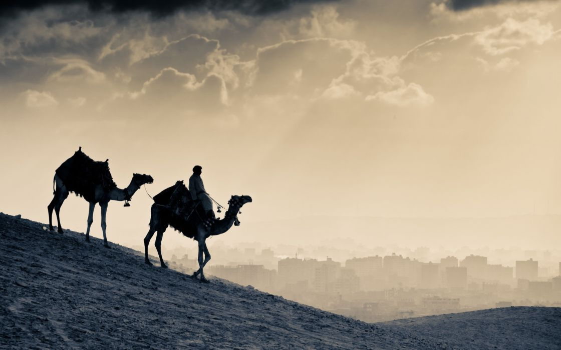 Two camels in the desert wallpaper
