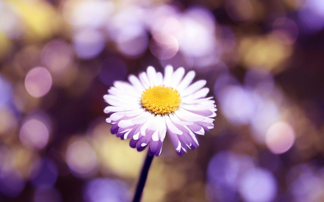 Flower glare petals wallpaper