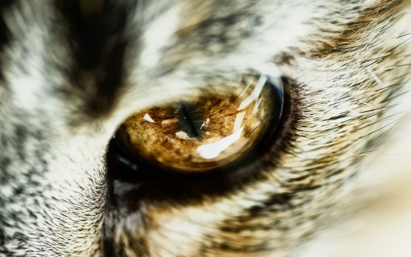 Cat eye close-up wallpaper
