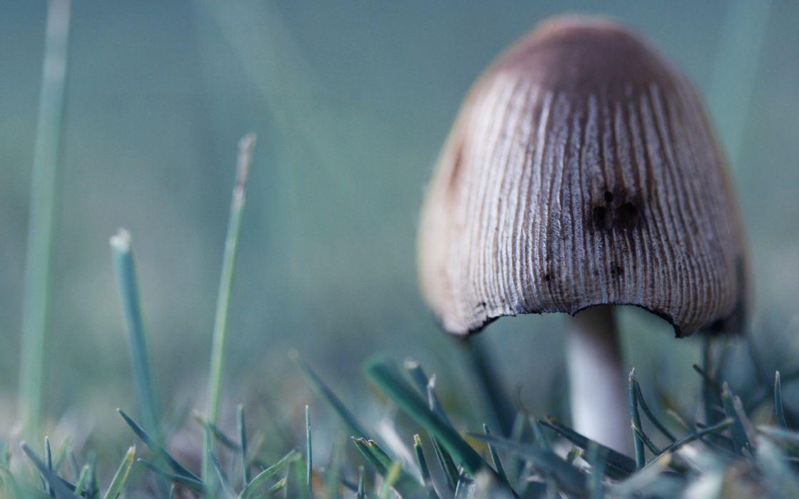 Wild mushroom wallpaper
