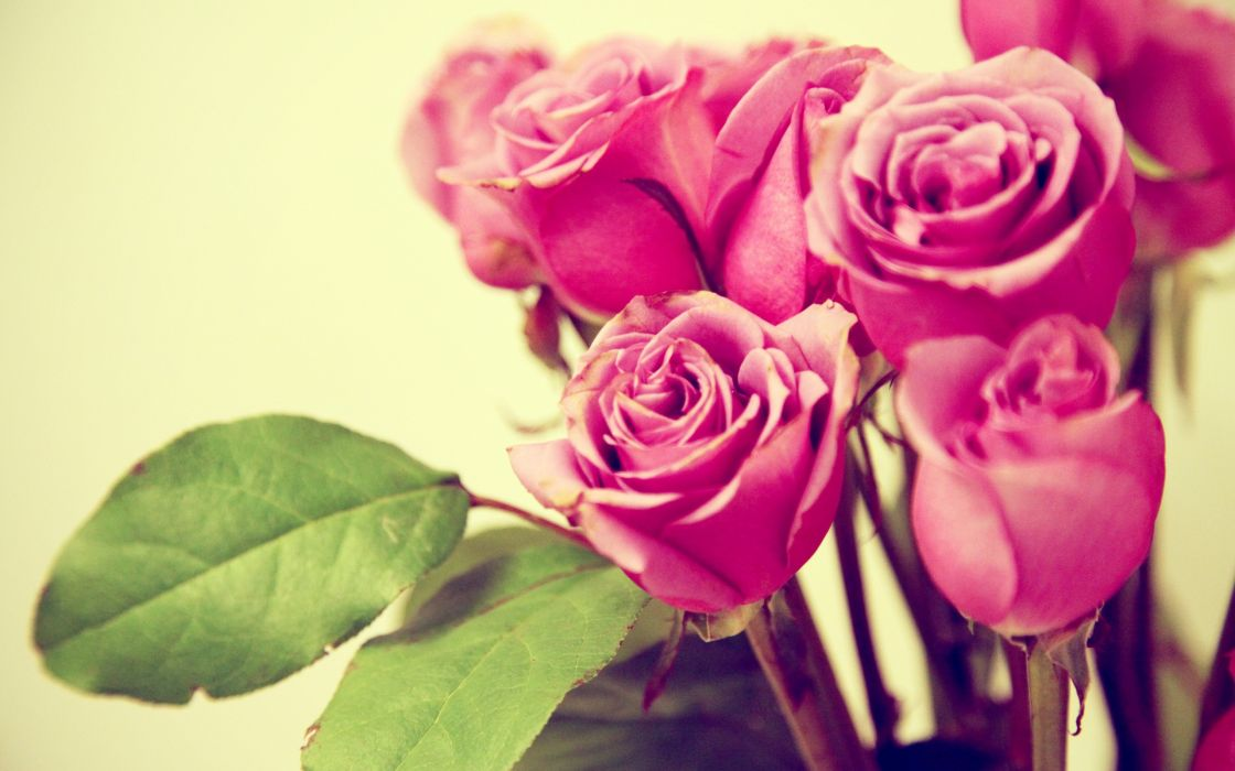 Retro roses wallpaper
